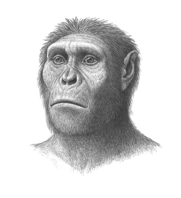 1-australopithecus-sediba-head-mauricio-anton